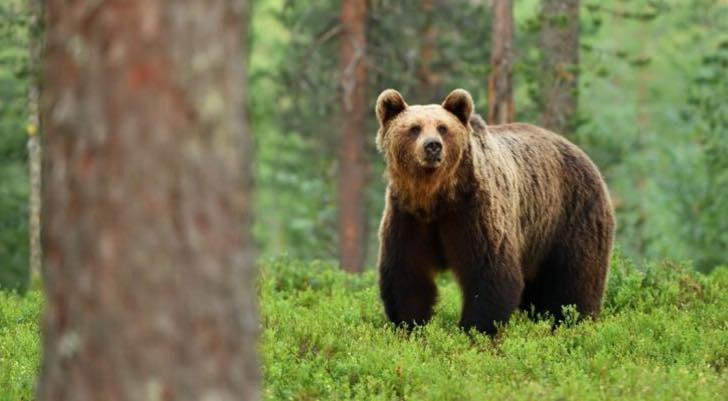 A Bear Story!